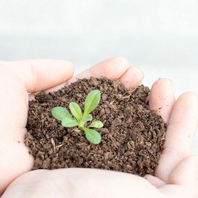 植物新品种登记